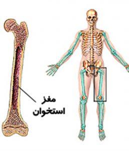 مغز و استخوان